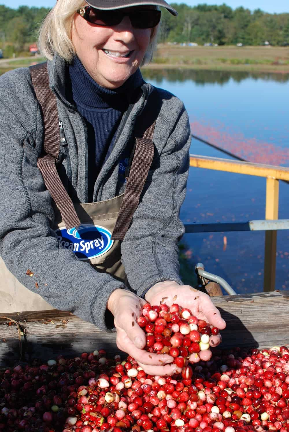 Cranberry farmer holding a handful of fresh cranberries
