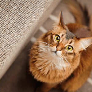 What Cat Breed Is Right For You – Feline Good Giveaway too!